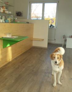 """Praxis-""""Wachhund"""" Juri weiß das tiergerechte Wartezimmer der Kleintierpraxis Hartberg zu schätzen"""