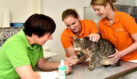 Die Kleintierpraxis Hartberg bietet Vorsorge, Diagnostik und Therapie für Ihren Vierbeiner